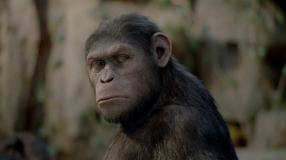El origen del planeta de los simios | El fotograma