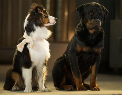 La distribuidora australiana de 'Superagente canino' recorta dos escenas polémicas de la película