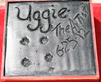 Huellas de Uggie en Hollywood