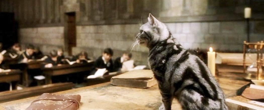 La gata McGonagall
