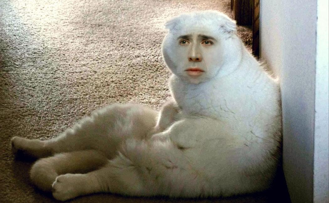 Las setas alucinógenas y su gato