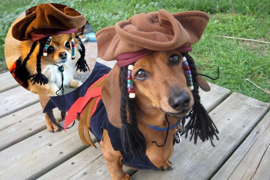 El disfraz de Jack Sparrow para perritos