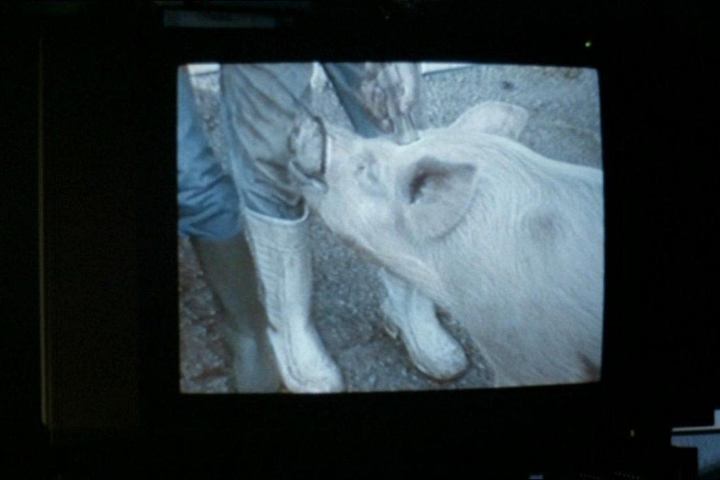 El cerdo en 'El vídeo de Benny'