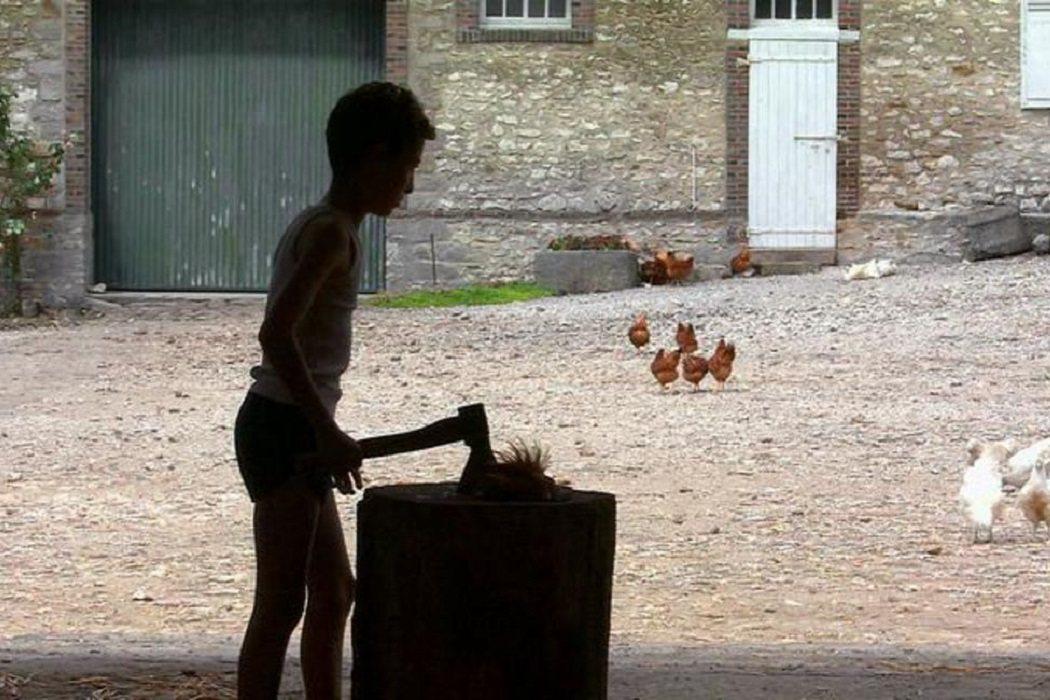 La gallina decapitada en 'Caché'