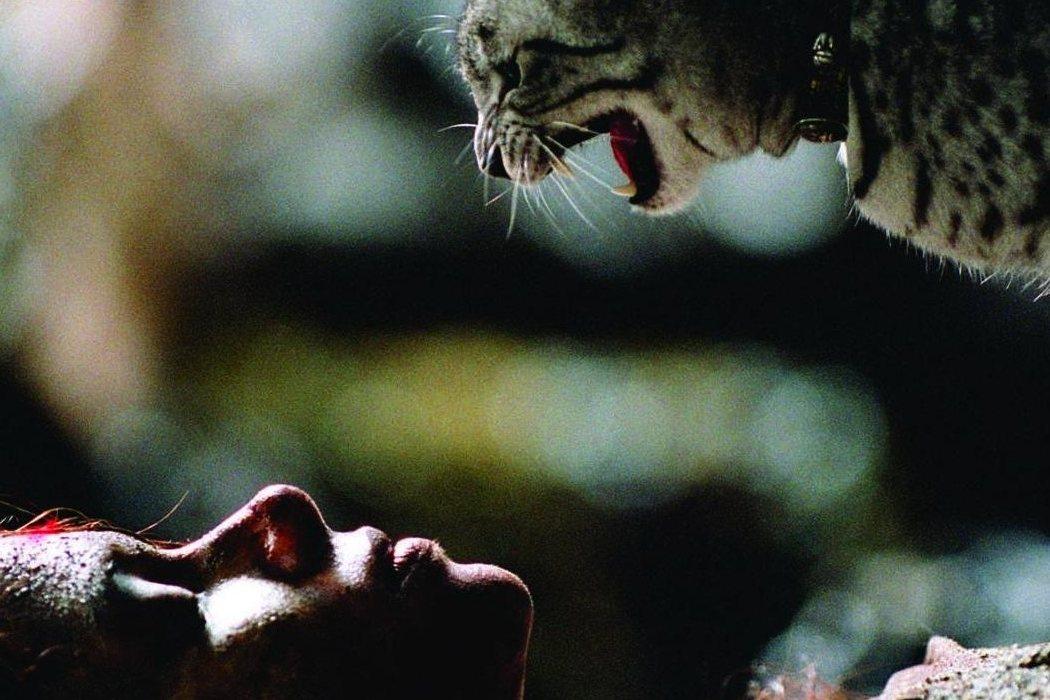 El papel de los gatos