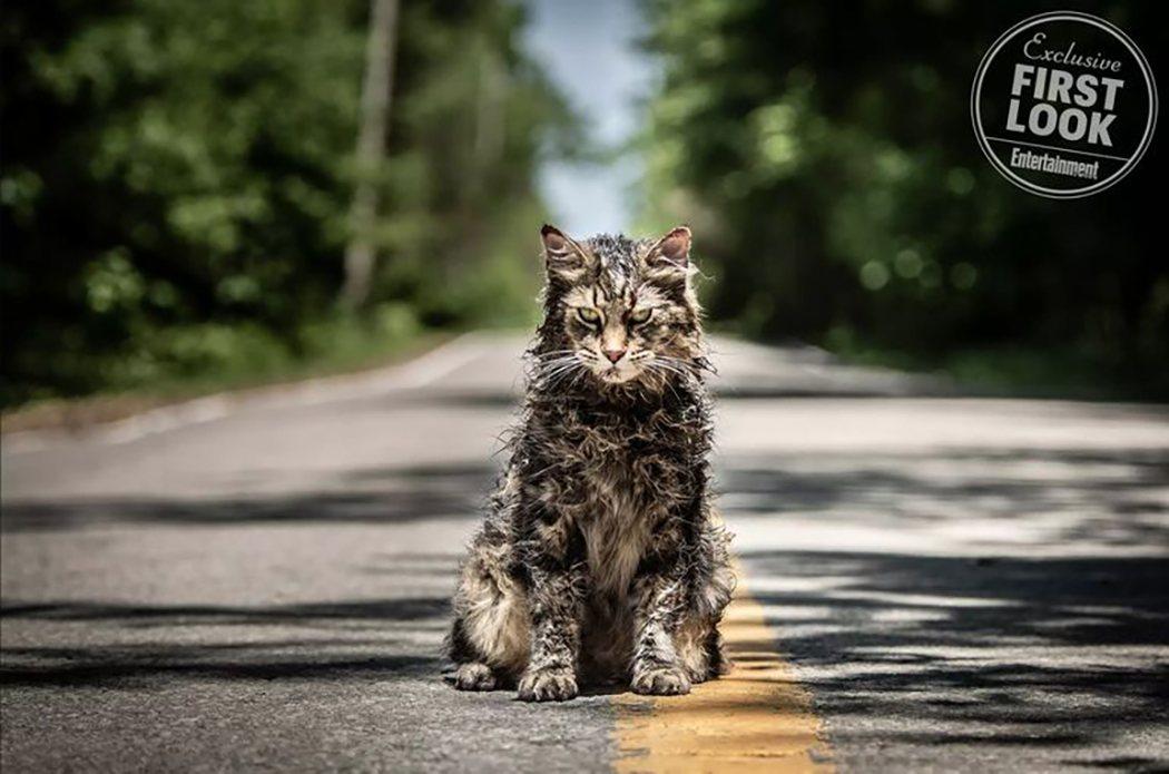 Terrorífico gato