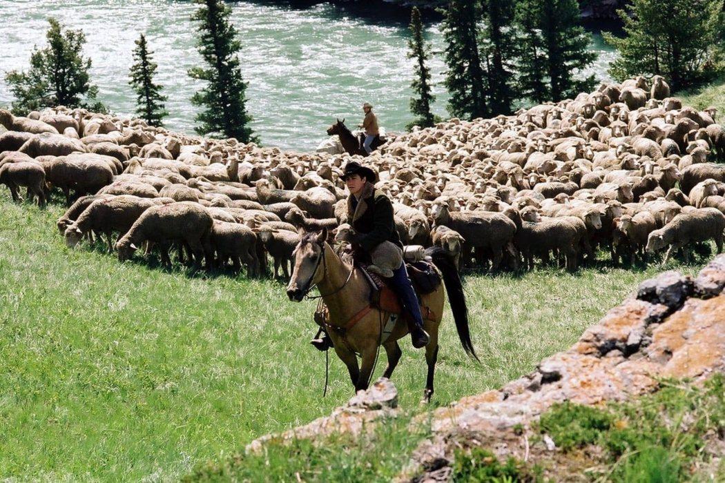 Volviendo a trabajar con ovejas