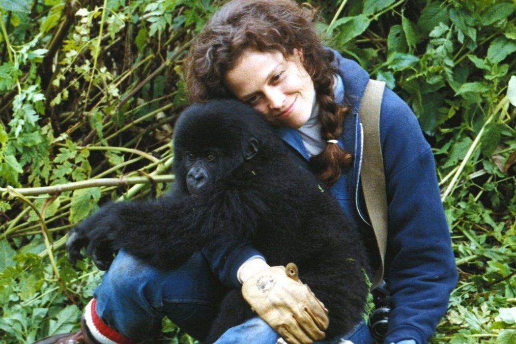 Diane Fossey en 'Gorilas en la niebla' (1988)