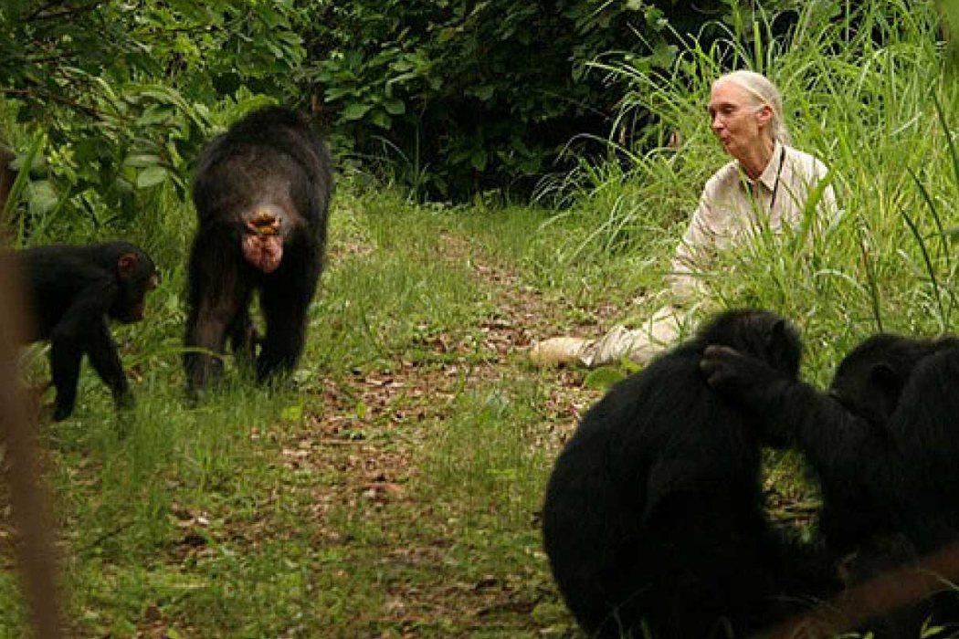 Jane Goodall en 'El viaje de Jane'