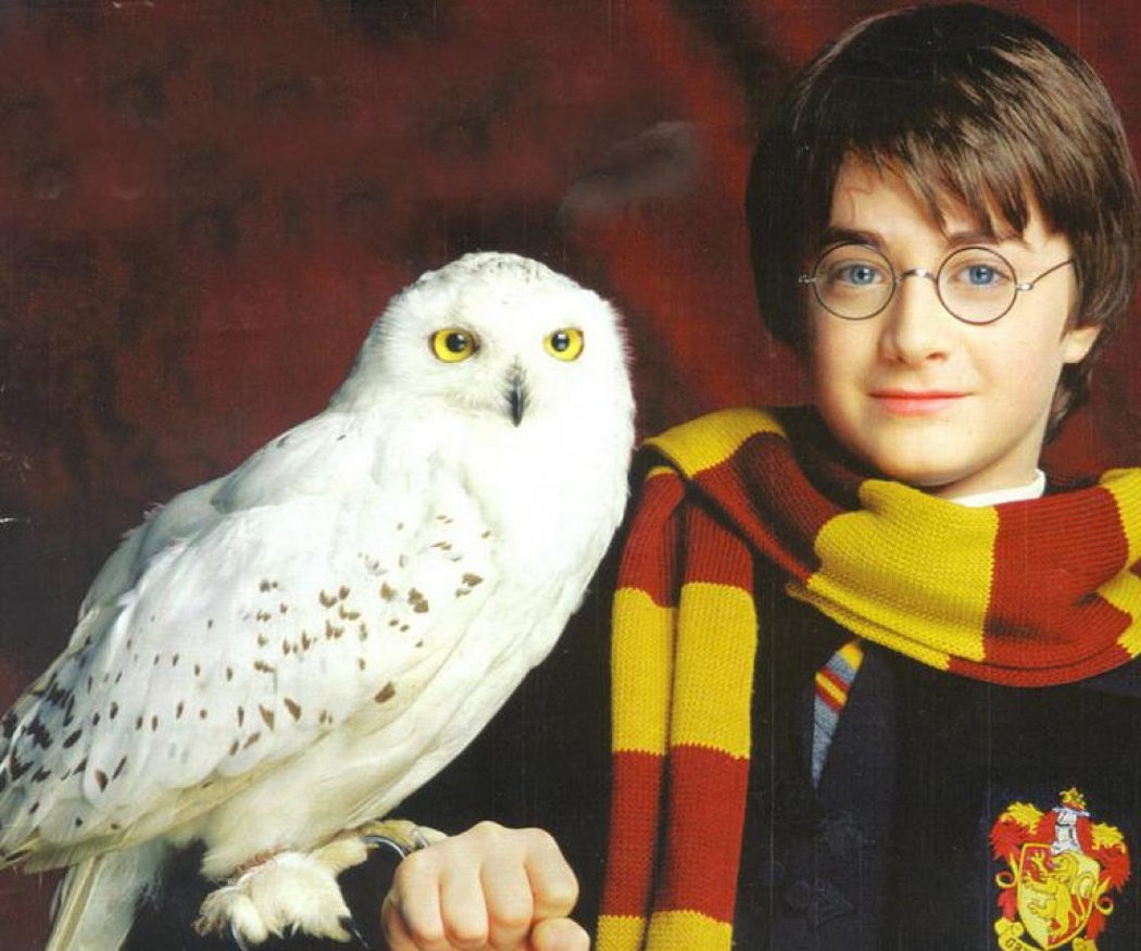 Hedwig de 'Harry Potter'
