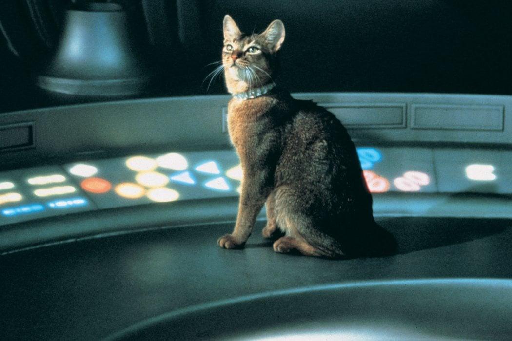 'El gato que vino del espacio' (1978)