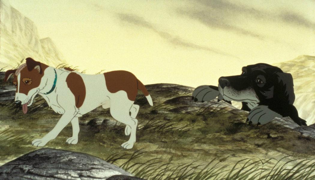 'Los perros de la plaga' - 1982