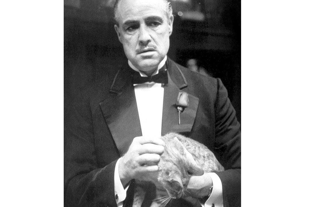 El gato de Don Corleone