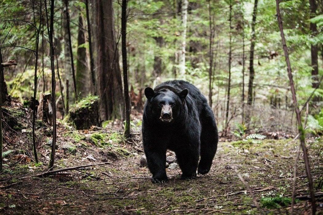 'En el bosque sobrevive'