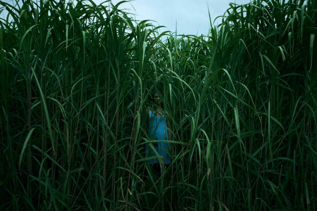 'En la hierba alta'