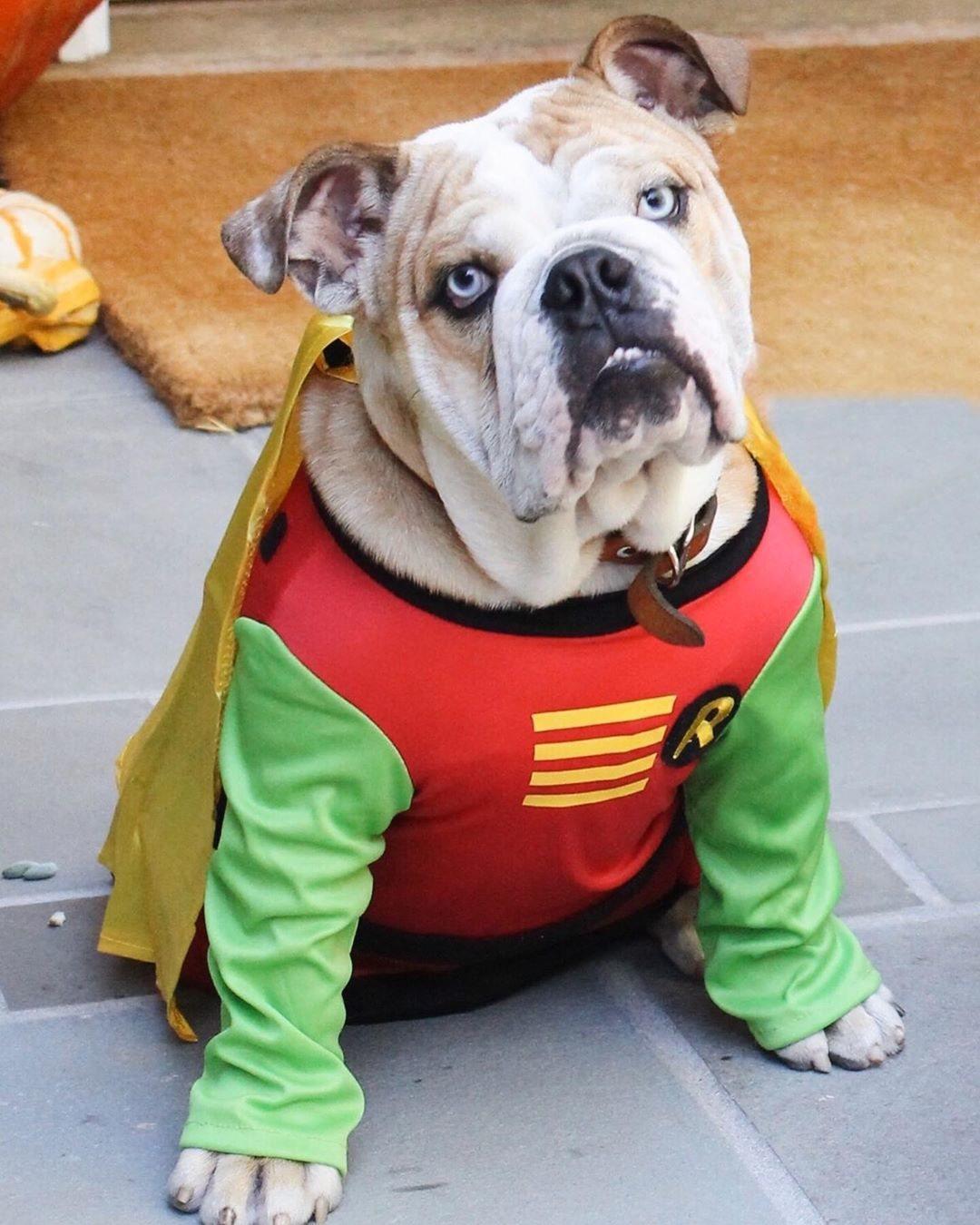 Lou, el perro de Reese Witherspoon, de Robin
