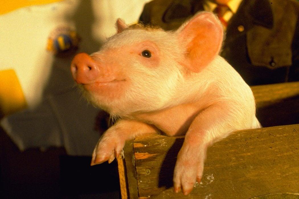 Su primera obra fue... ¡un musical sobre un cerdo disecado!