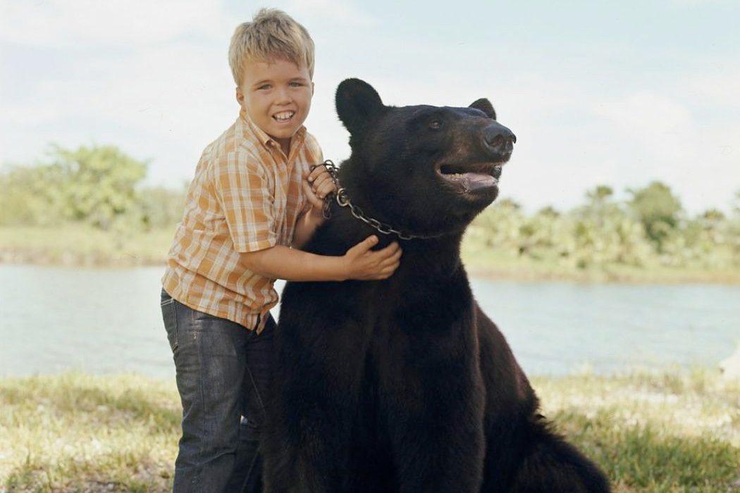 El oso Bruno