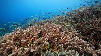 Tráiler 'Arrecifes: Oasis de vida'